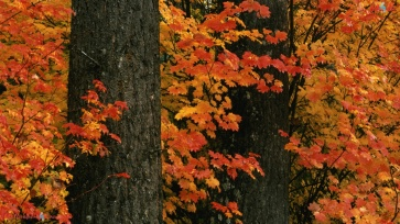 hocking_hills_state_park_in_fall_ohio-1280x720